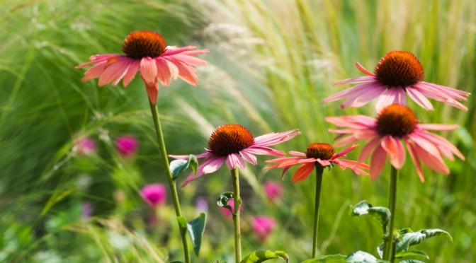 Van Dusen Botanical Garden, Vancouver B.C. - July 17th, 2007