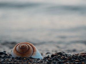 sea-shell-872023_960_720