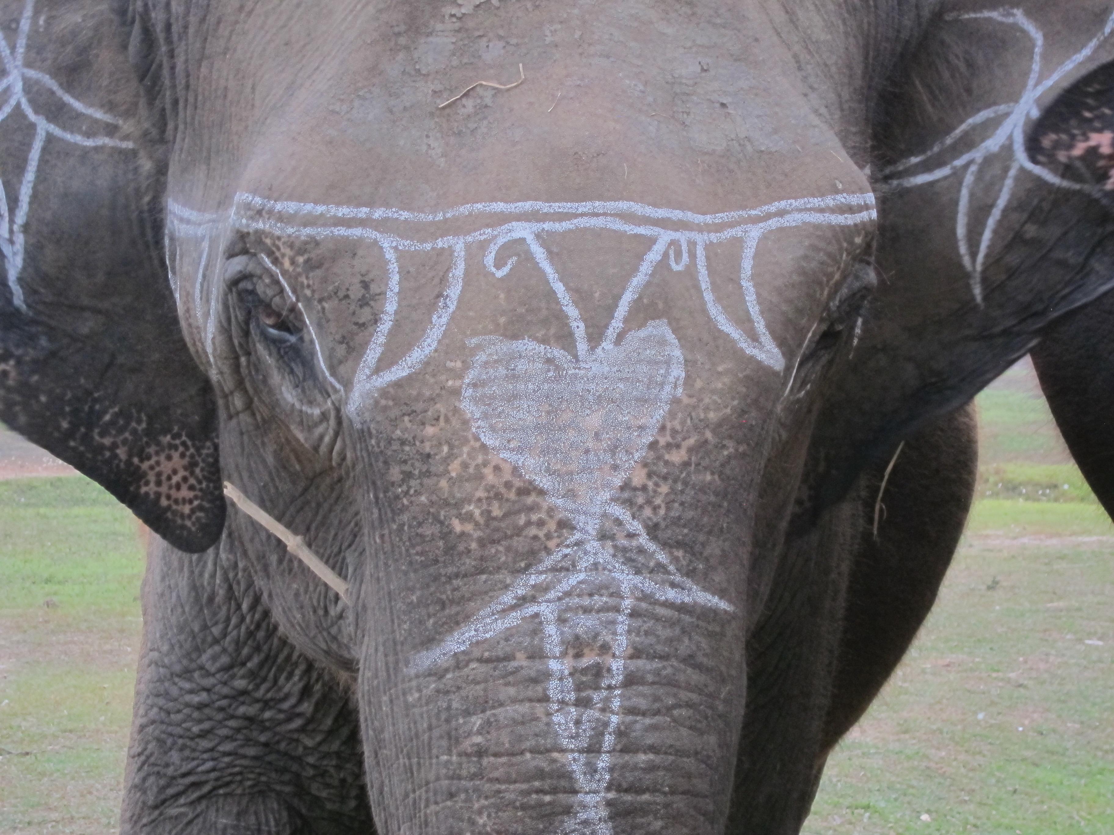 Terai Elephant